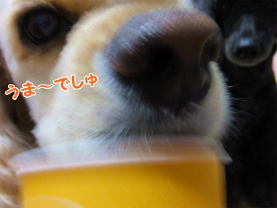 024_20141010211819de3.jpg