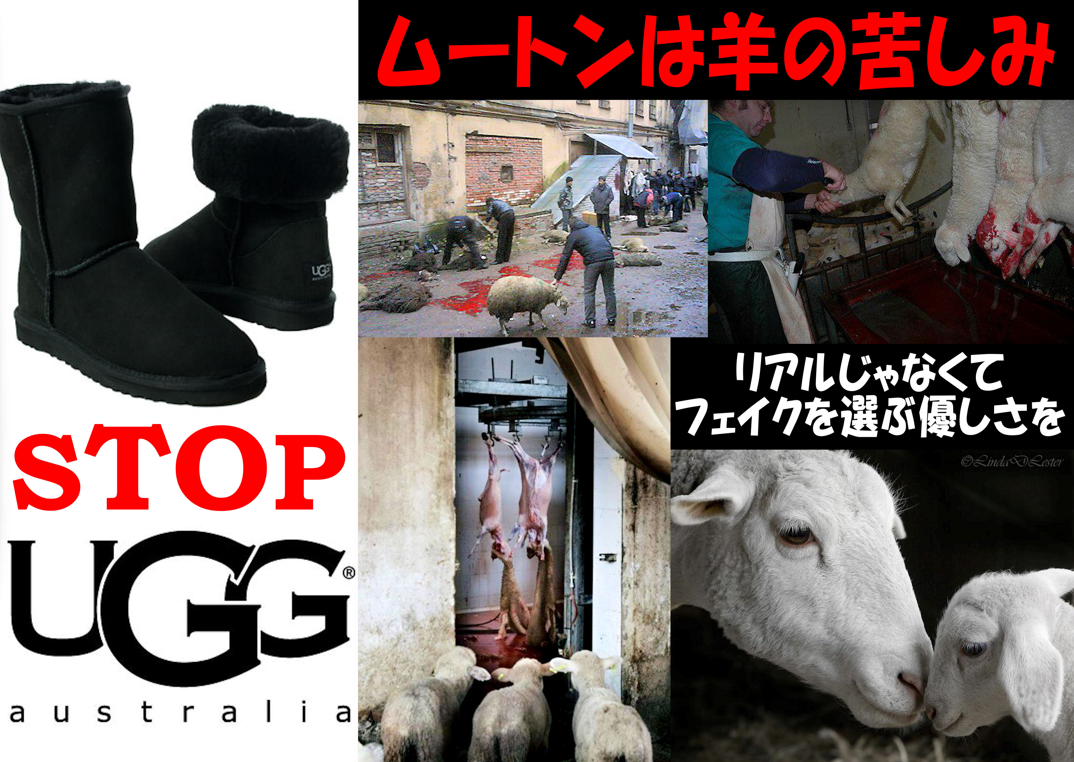 animalfreedemo12.jpg
