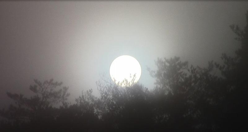 霧の中の日ノ出