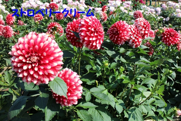 IMG_1578_20141009195209e14.jpg