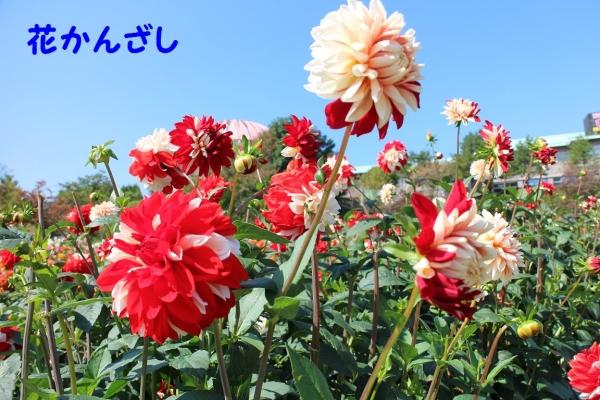 IMG_1585_201410091953246a0.jpg