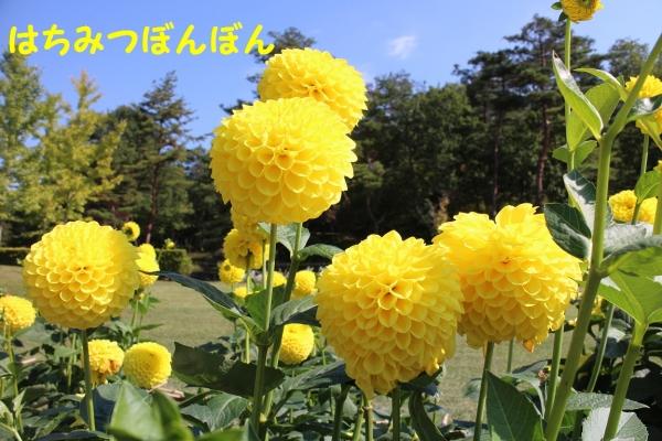 IMG_1629_20141009200821ffc.jpg