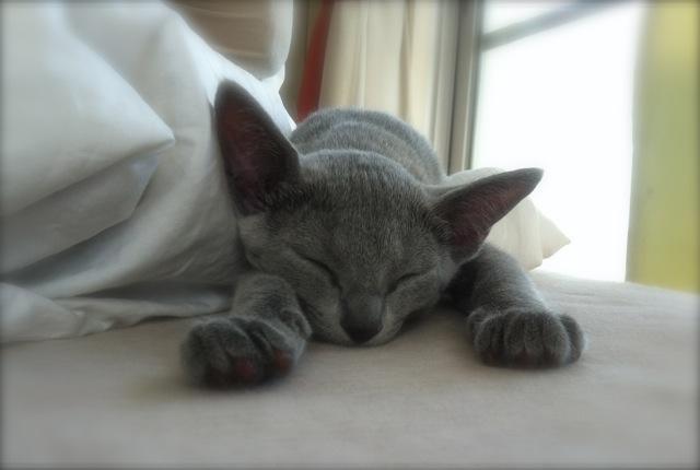 ベッドで寝るアンちゃん