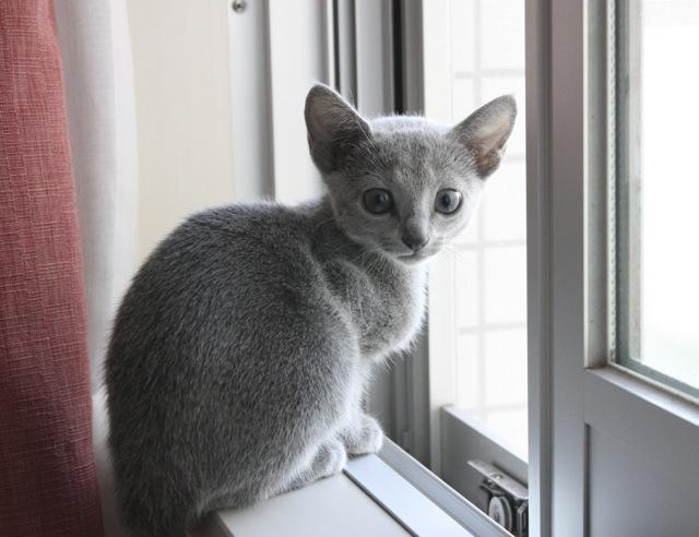 窓辺可愛いアン