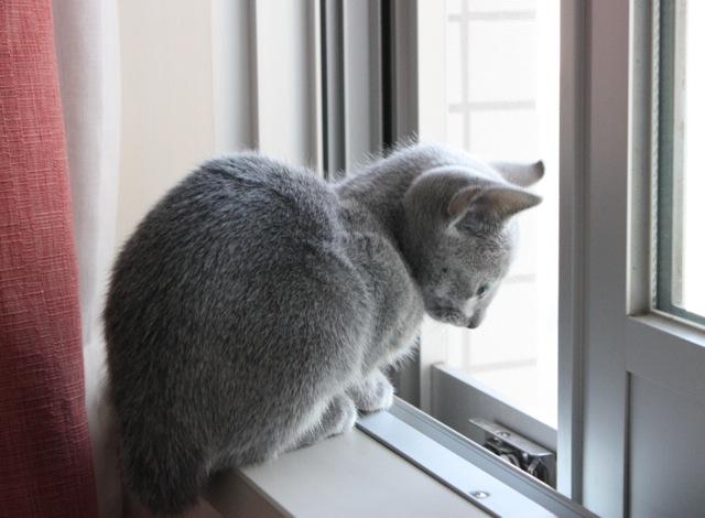 窓辺横向き