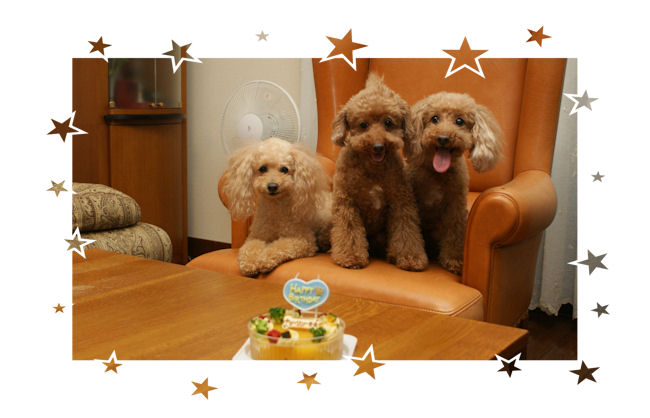DSC05777-cake.jpg