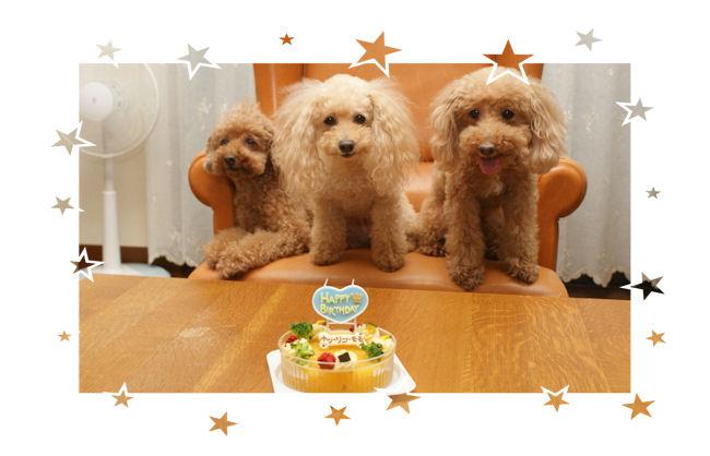 DSC05783-cake.jpg