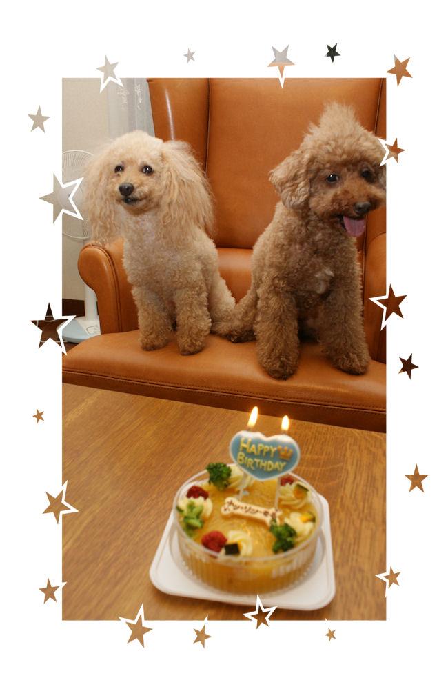 DSC05801-cake.jpg