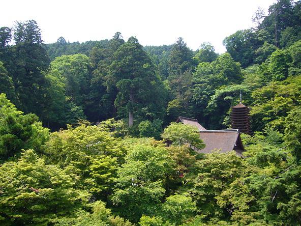 談山神社。ホテルより