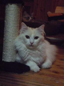 cat_tower2_20130417145656.jpg
