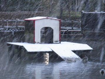 20140204降雪 (10)圧縮