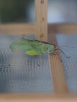 20140913秋の七草と鳴く虫の会 (13)