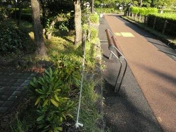 20141018苗木植え付けシャクナゲ (1)