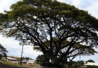マウナケアとハワイ島&ホノルル001