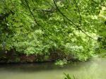 なからぎの池
