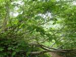 道を遮る枝