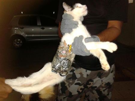 ブラジル猫