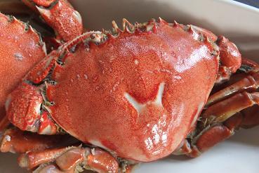 H蟹?? 002