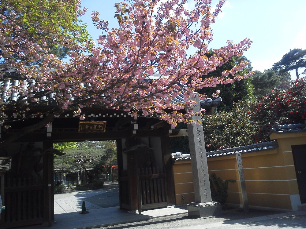F1000722一条院の八重桜