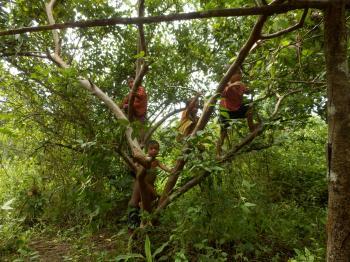 木登りの子ども達