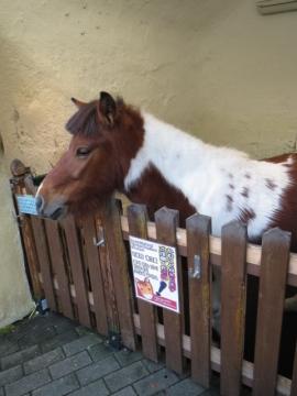 馬のフローラちゃん