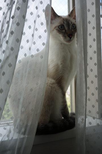 窓辺でポーズをとるアッシュ