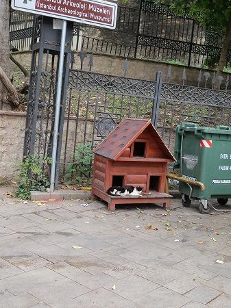 ノラ猫の家!