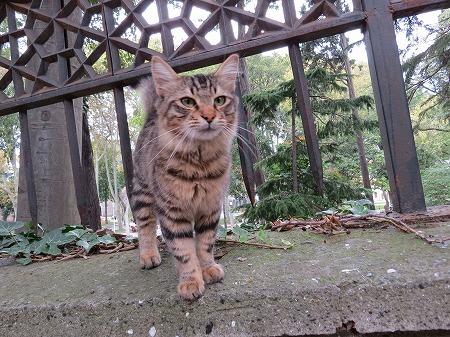 塀の上の猫ー1