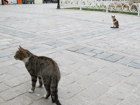 スルタンアフメット広場の猫