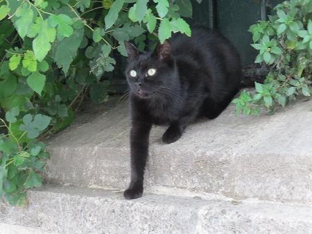 地下宮殿の黒猫さん
