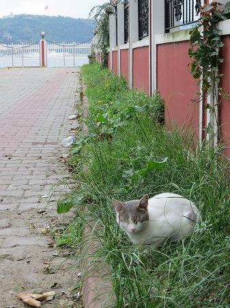 ホルスタイン猫・・眠りました。