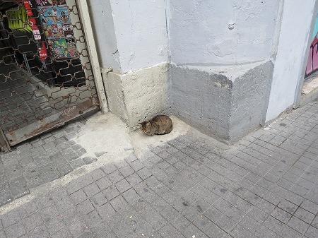 ご主人様の帰りを待つ猫?