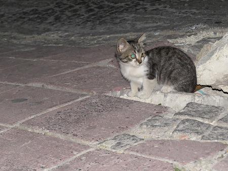 トルコ石の瞳をもつ子猫