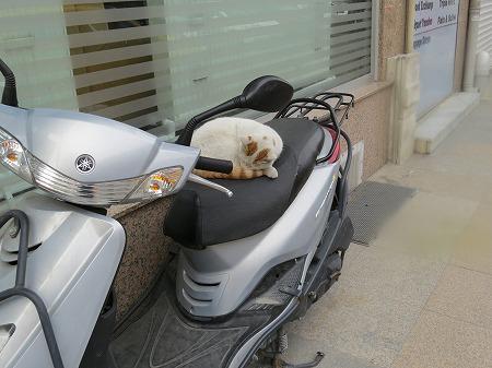 バイクシート・・最高・・・。