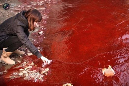 【中国】おでこからおちんちんが生えた人面豚が生まれる(画像あり) ©2ch.net ->画像>59枚