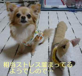 blog2013060104.jpg