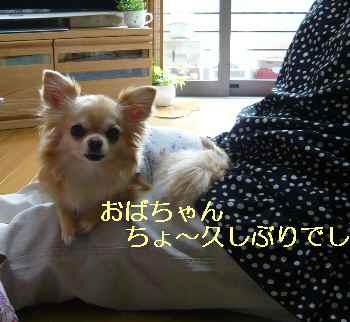 blog2013060501.jpg