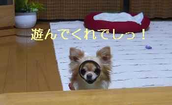 blog2013061101.jpg