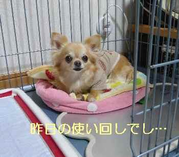 blog2013061801.jpg