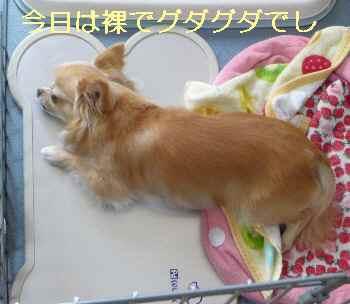 blog2013061802.jpg