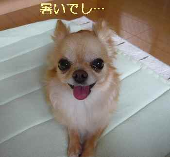 blog2013070601.jpg