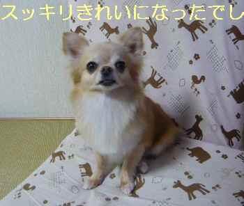 blog2013070602.jpg