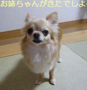 blog2013071003.jpg