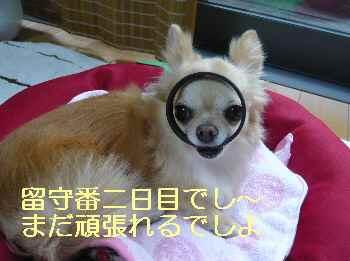 blog2013071801.jpg