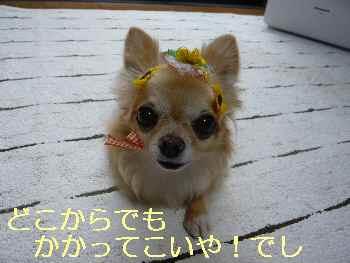 blog2013073104.jpg