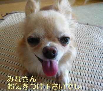 blog20130801102.jpg
