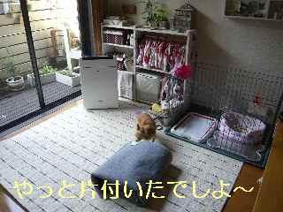 blog2013080704.jpg
