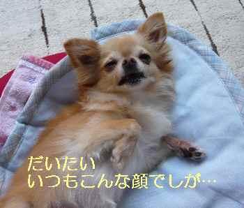 blog2013081301.jpg