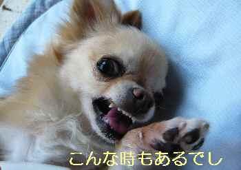 blog2013081303.jpg