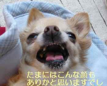 blog2013081304.jpg